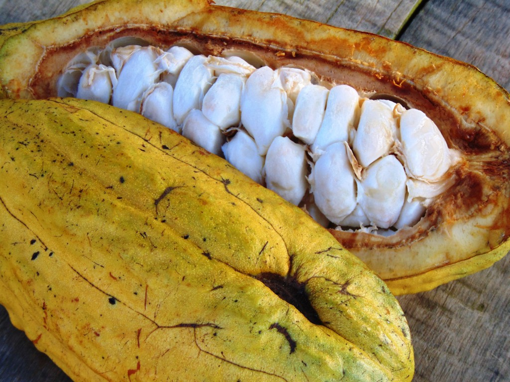Cacao Tunapuy 14
