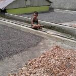 Cacao Tunapuy